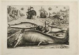 Mullet, cachalot and sea-lion Graphic | Collaert, Adriaen (1560-1618). Artist
